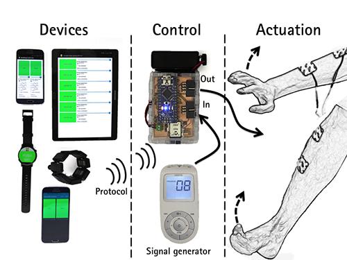 virtual lab muscle stimulation